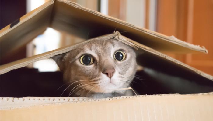 การเลี้ยงแมวต้องเริ่มต้นอย่างไร จะต้องเตรียมตัวให้พร้อม