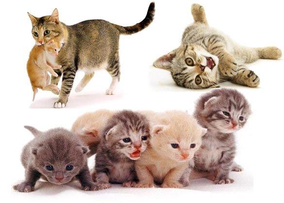 การเลี้ยงแมวต้องเริ่มต้นอย่างไร ที่สำคัญถ้าหากใครจะเลี้ยงแมวจะต้องให้ความรักความเอาใจใส่