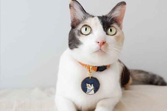 การเลี้ยงแมวต้องเริ่มต้นอย่างไร สัตว์เลี้ยงที่มีความน่ารัก