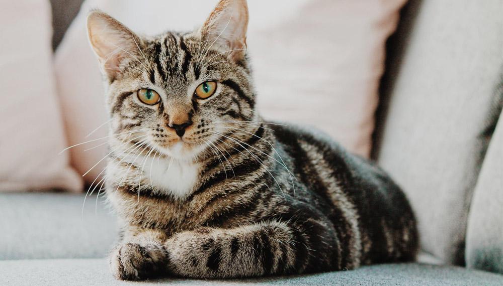 การเลี้ยงแมวต้องใช้เงินเท่าไหร่