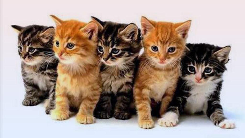 ทำไมแมวจึงเป็นสัตว์เลี้ยงที่มีคนหลงรัก และทำให้มนุษย์หลงใหลได้
