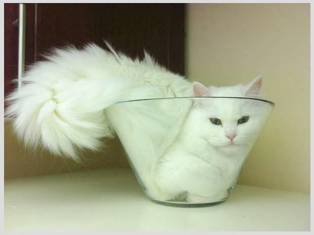 ทำไมแมวจึงเป็นสัตว์เลี้ยงที่มีคนหลงรัก และหลงใหล