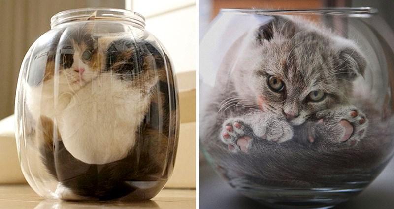 ทำไมแมวจึงเป็นสัตว์เลี้ยงที่มีคนหลงรัก เป็นสัตว์เลี้ยงที่ผู้คนหลงใหลมากที่สุด