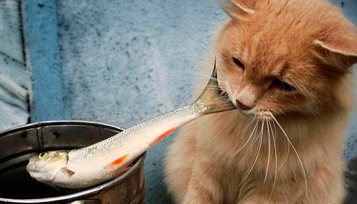 อาหารของแมว อาหารโปรดที่แมวชอบ อาหารชนิดที่สอง คือ ปลา