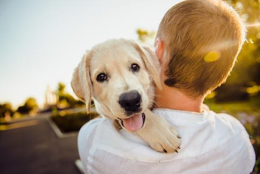 สัตว์เลี้ยงแสนรักที่มีความผูกพันกับเจ้าของมากมาย