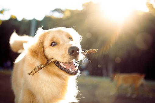 สัตว์เลี้ยงแสนรัก มันรักเจ้าของมากแค่ไหน!!