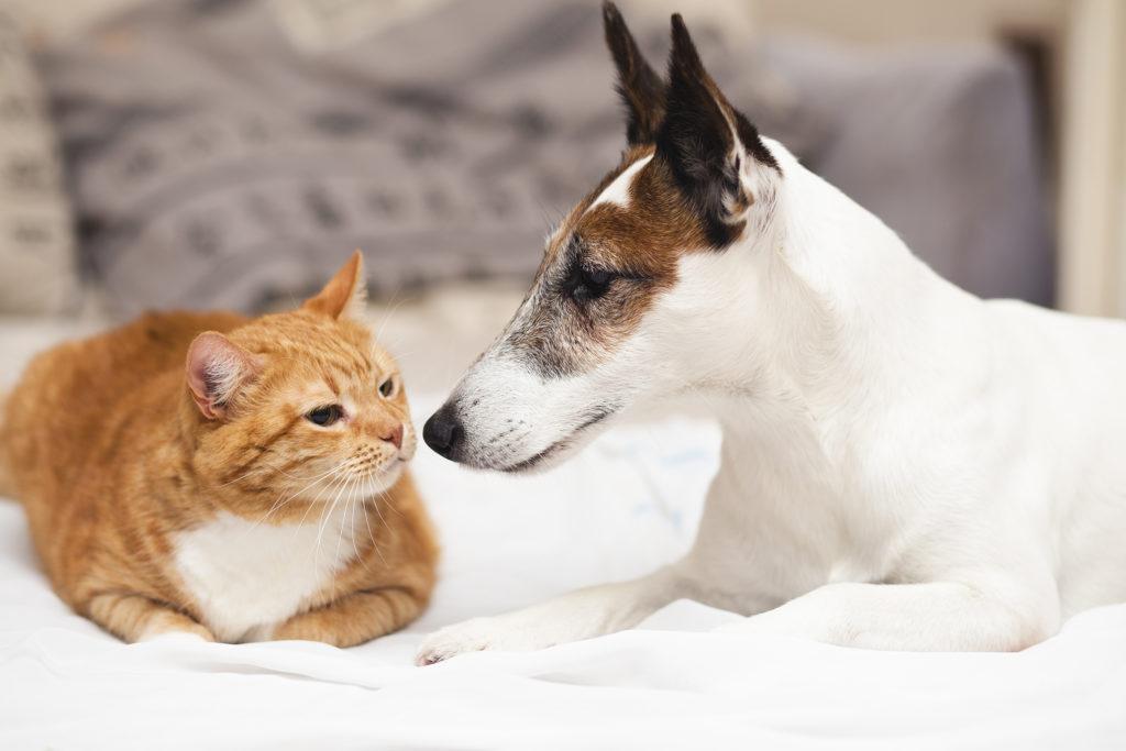 หมากับแมวอะไรน่าเลี้ยงกว่ากัน เหตุผลที่จะช่วยให้คุณได้ตัดสินใจ