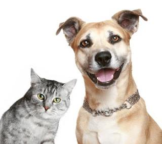หมากับแมวอะไรน่าเลี้ยงกว่ากัน สัตว์เลี้ยงน่ารัก