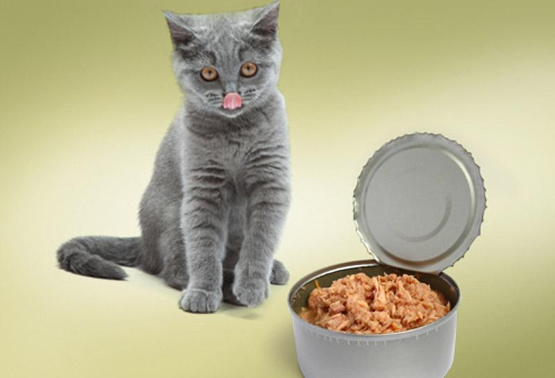 อาหารของแมว อาหารโปรดที่แมวชอบ อาหารชนิดแรก คือ เนื้อปรุงรส