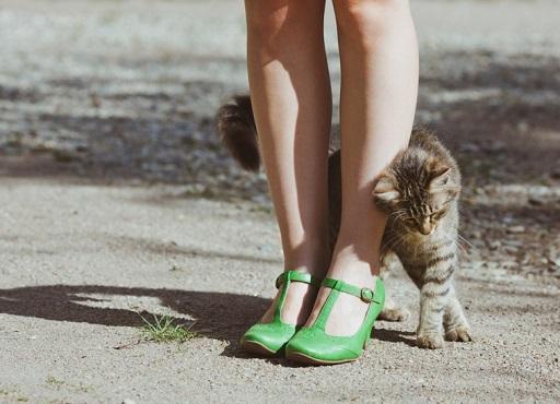พฤติกรรมของแมว ที่แมวชอบมา ถูไถคุณ