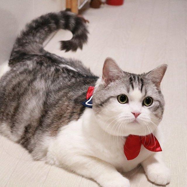 แมวที่มีราคาแพงที่สุดในโลก จนต้องตะลึง