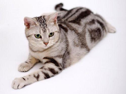 แมวสายพันธุ์ไหนเหมาะกับคุณที่สุด ให้คุณได้เลือก