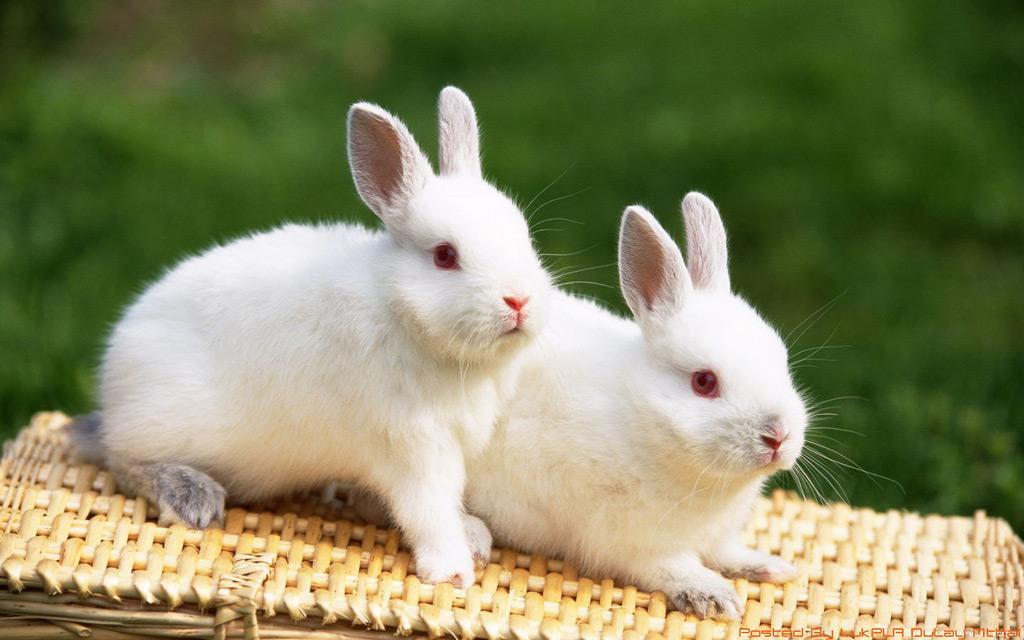 กระต่าย เป็นสัตว์เลี้ยงลูกด้วยนม