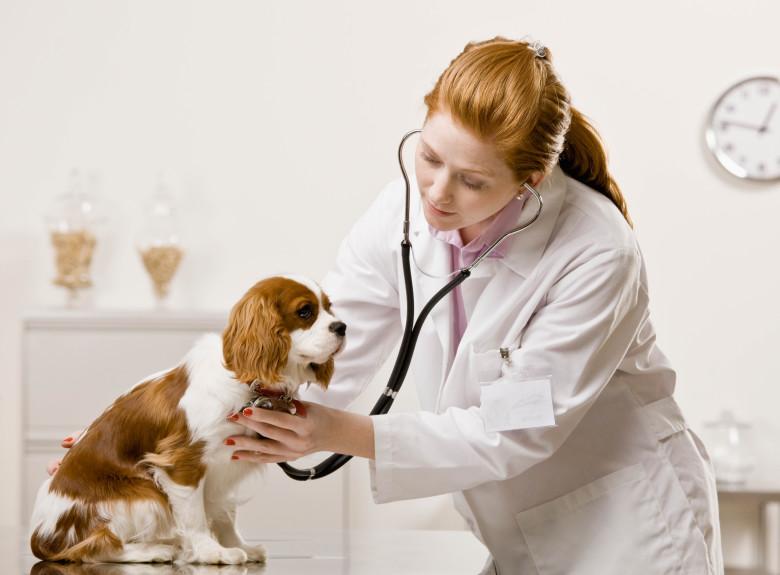 การนำสุนัขไปพบแพทย์
