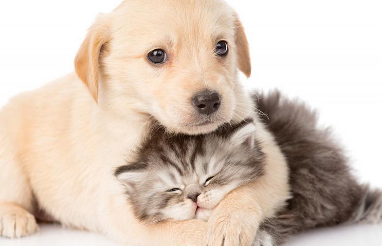 การเลี้ยงสัตว์เลี้ยง ของแต่ละบ้าน