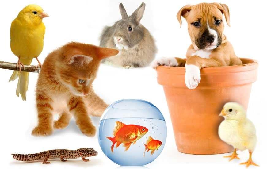 การเลี้ยงสัตว์เลี้ยง สำคัญจริงหรือ