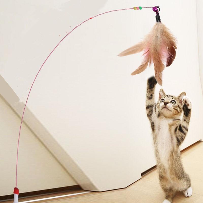 ของเล่นแมว เป็นสิ่งสำคัญที่ขาดไม่ได้