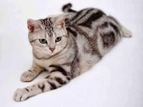งบ 1 หมื่น เลี้ยงแมวอะไรได้บ้าง มาดูราคาแมว