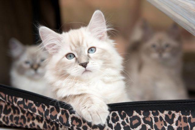 ท่าทางแมว บ่งบอกว่าแมวกำลังจะบอกอะไรคุณ!!