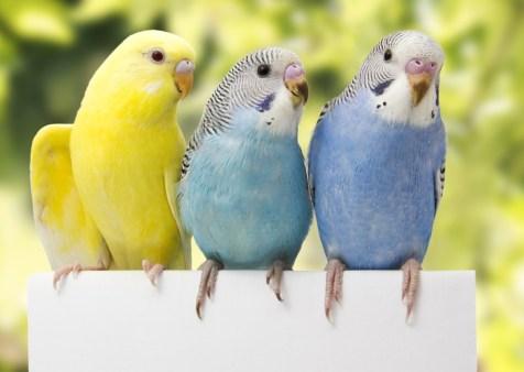 นก สัตว์เลี้ยงเสียงไพเราะ เสนาะหูน่าฟัง