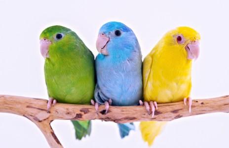นก เลี้ยงไว้เพื่อความเพลิดเพลิน