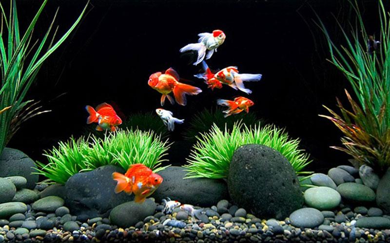 ปลาสวยงาม ที่นิยมเลี้ยงกัน สัตว์เลี้ยงผู้งดงามในโลกเงียบ