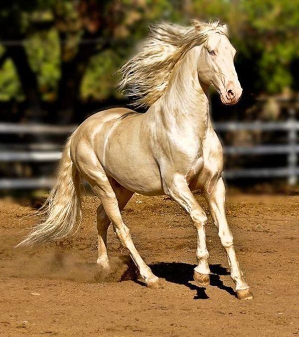 ม้ามีกล้ามเนื้ออันทรงพลัง
