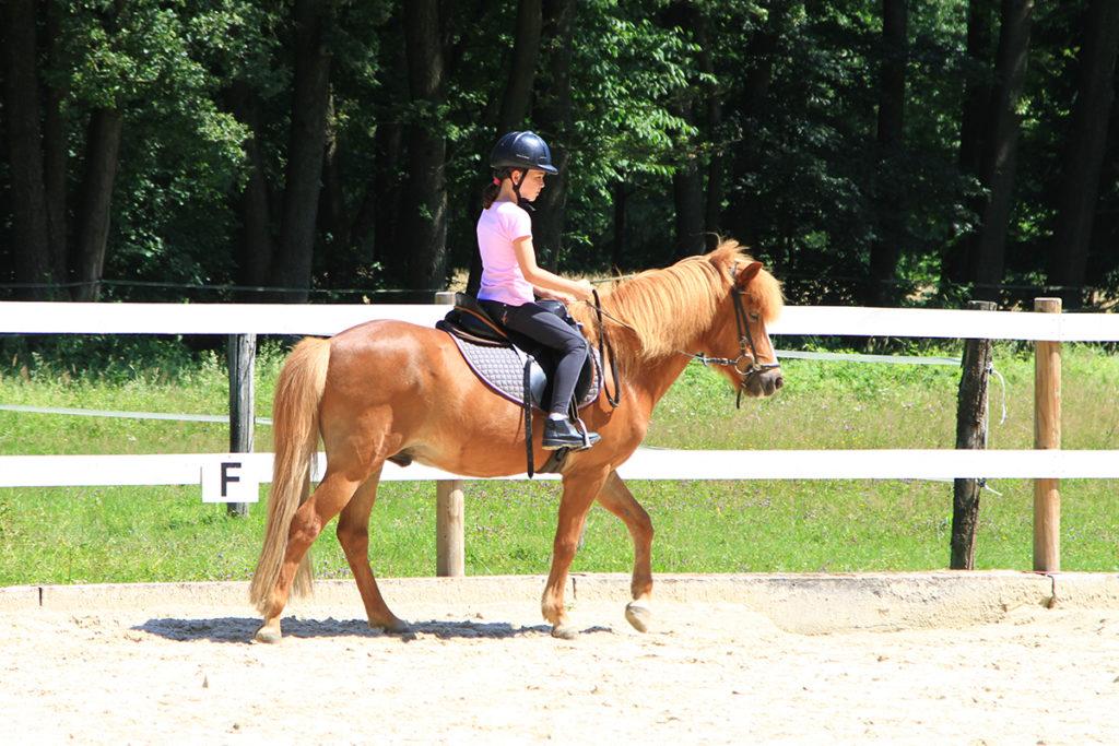 ม้าเรียนรู้และเลียนแบบได้ดี