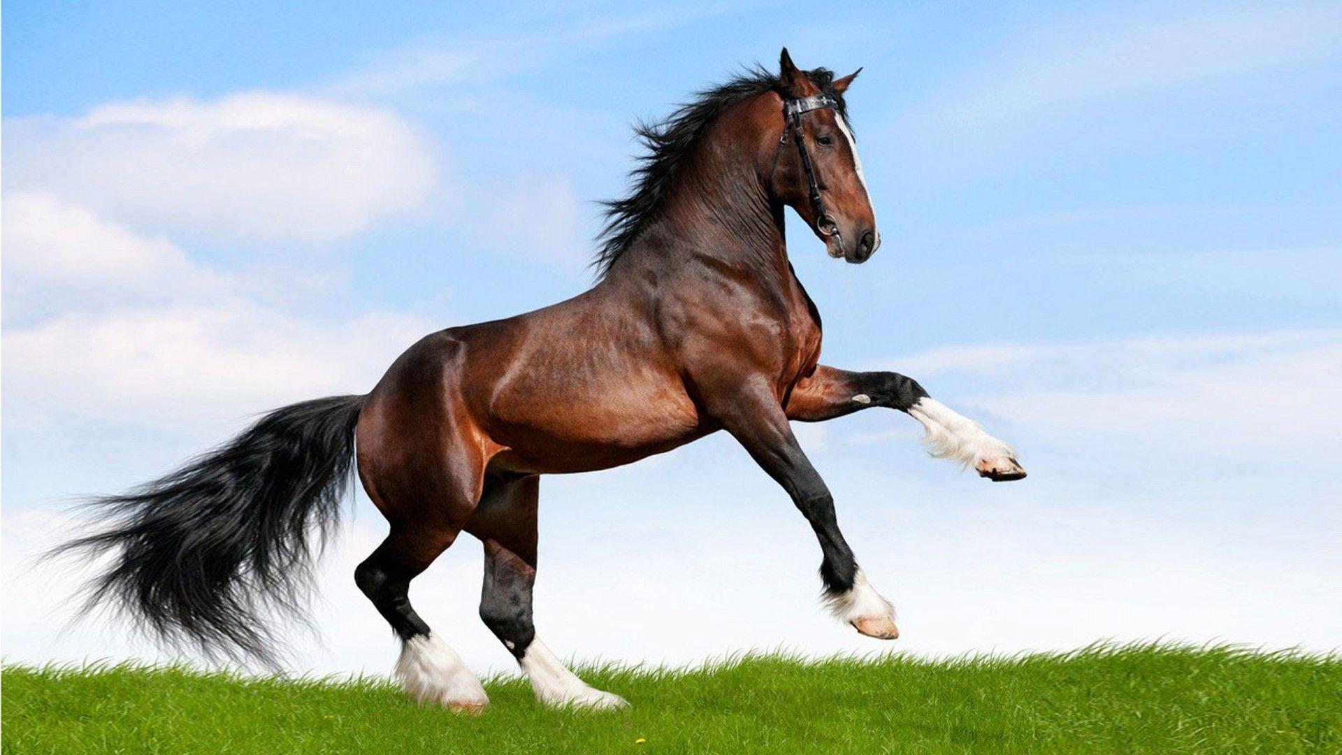ม้า สัตว์เลี้ยงที่น่าทึ่ง สามารถเรียนรู้ได้ดี