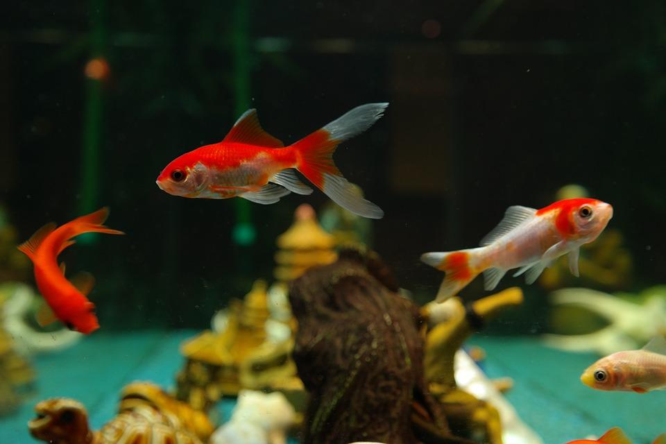 ลักษณะของปลา