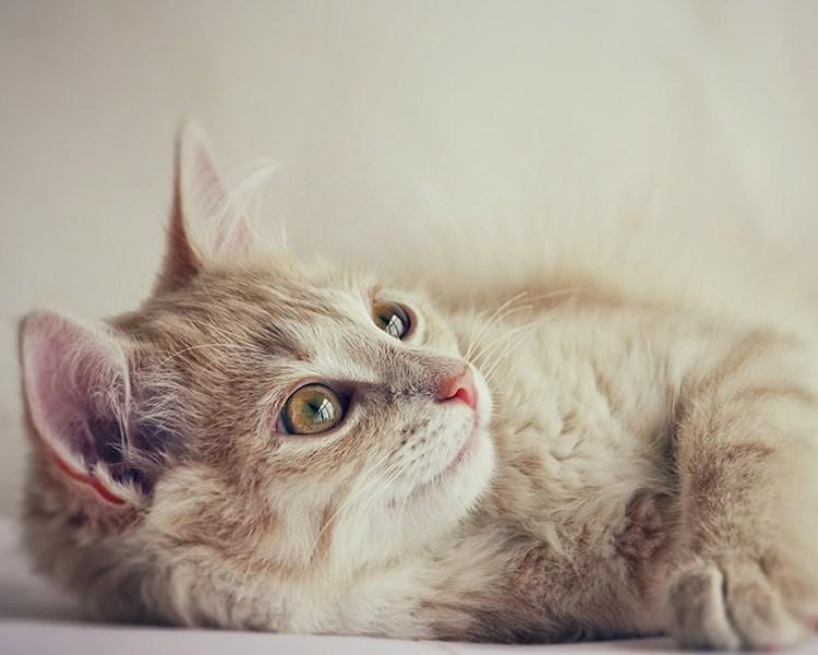 วิธีเลี้ยงแมว โดยไม่เสียเงิน ต้องทำอย่างไร