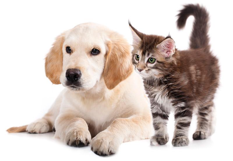 สัตว์เลี้ยงสี่ขา หมา-แมว สัตว์เลี้ยงที่เป็นเพื่อนคู่ใจ