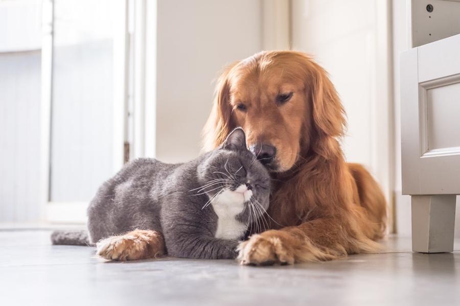 หมา-แมว สัตว์เลี้ยงคู่ใจ