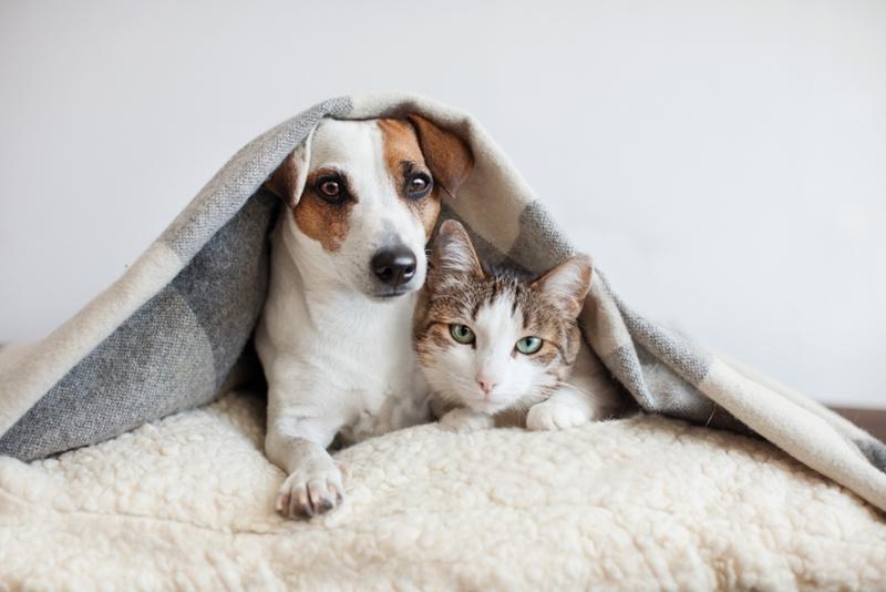 หมา-แมว สัตว์เลี้ยงที่น่ารัก