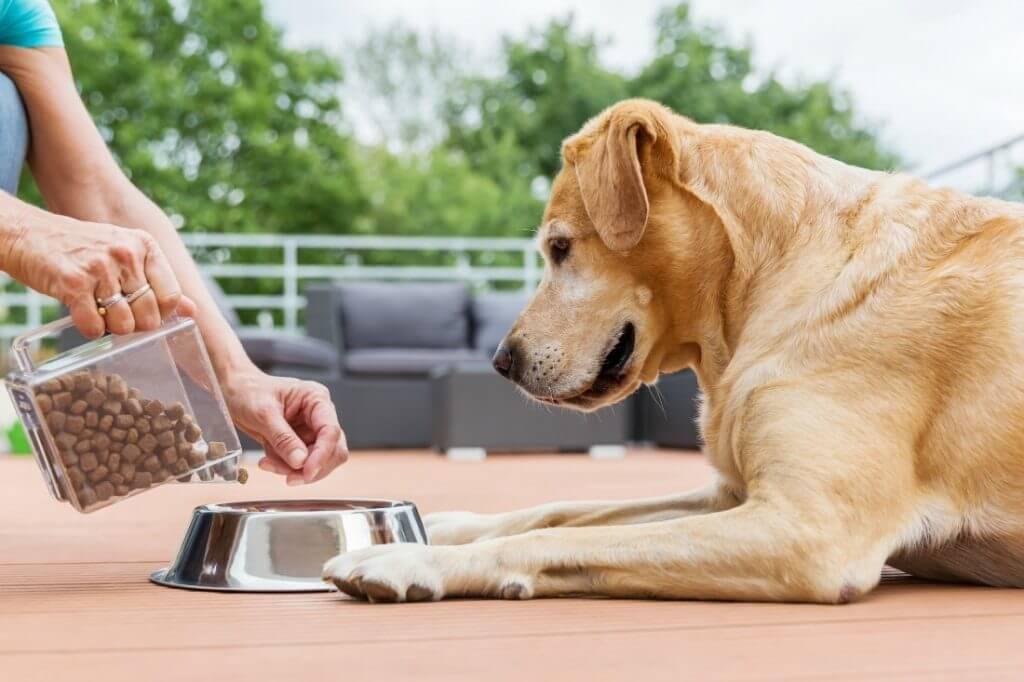 อาหารที่ใช้ในการเลี้ยงสุนัข