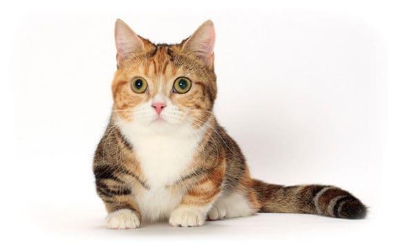 แมวนอนเก็บขาทั้งสองข้าง
