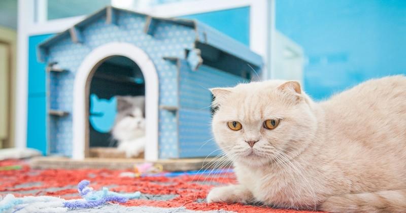 แมวหายออกจากบ้าน จะต้องทำยังไง ทาสแมวต้องรู้