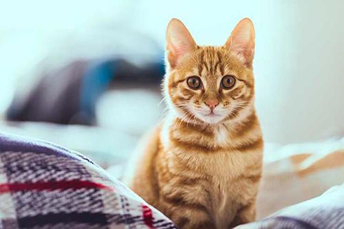 แมวกลายเป็นสัตว์เลี้ยงยอดนิยม