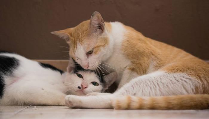 โรคที่เกิดกับแมว มีอะไรบ้าง