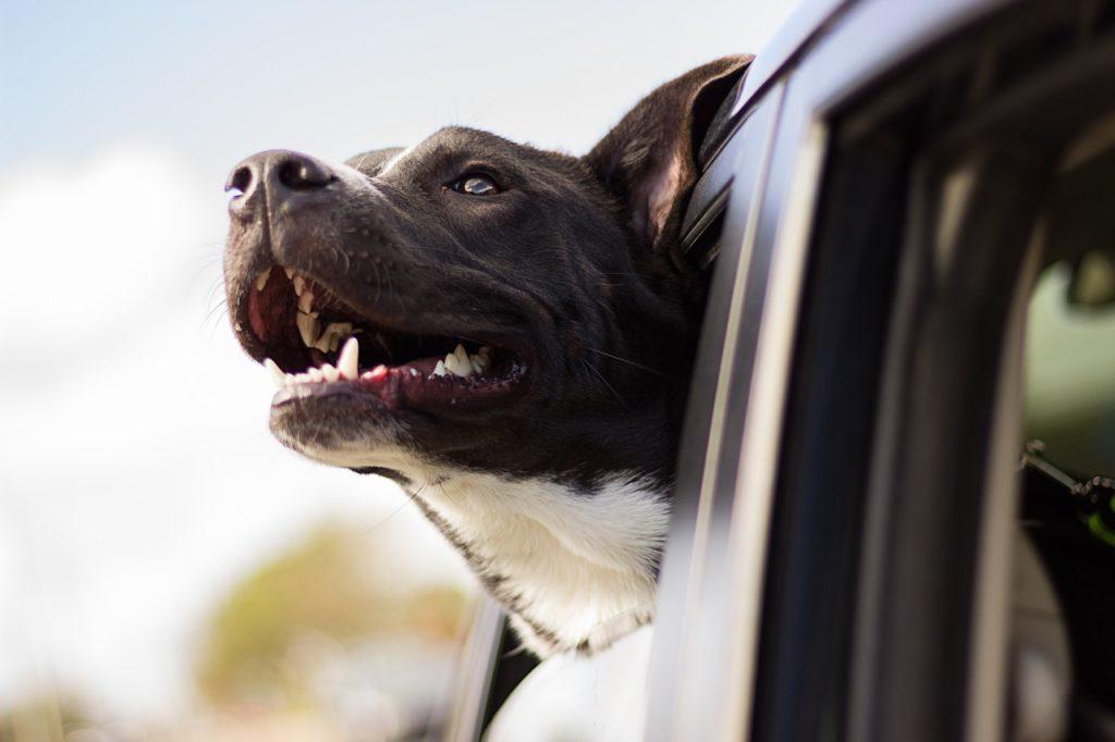 Emotional Support Animals สัตว์ที่ถูกนำมาใช้ในการบำบัดจิตใจ