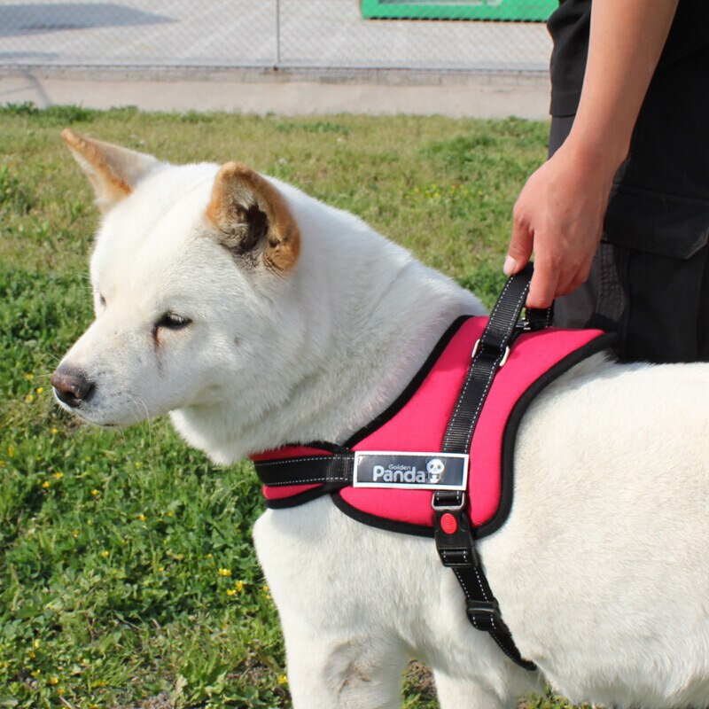 Service Dog สุนัขบริการ