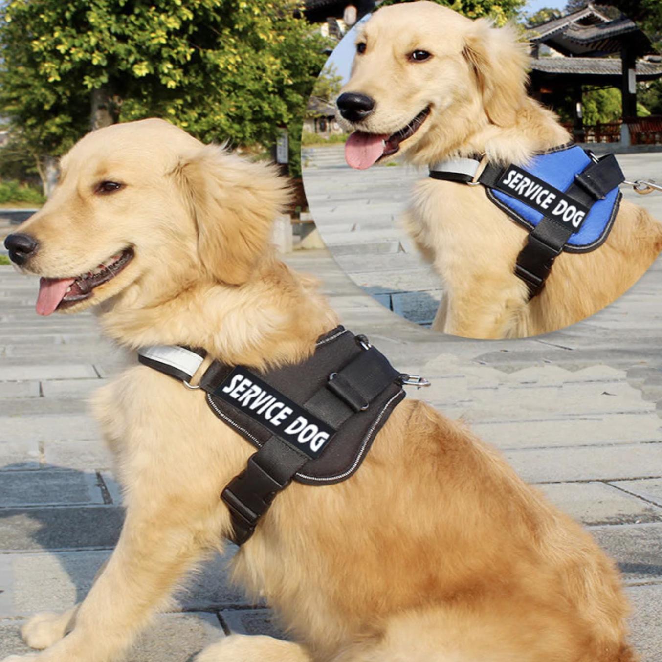 Service Dog หมาเซอร์วิช ถูกฝึกขั้นสูง