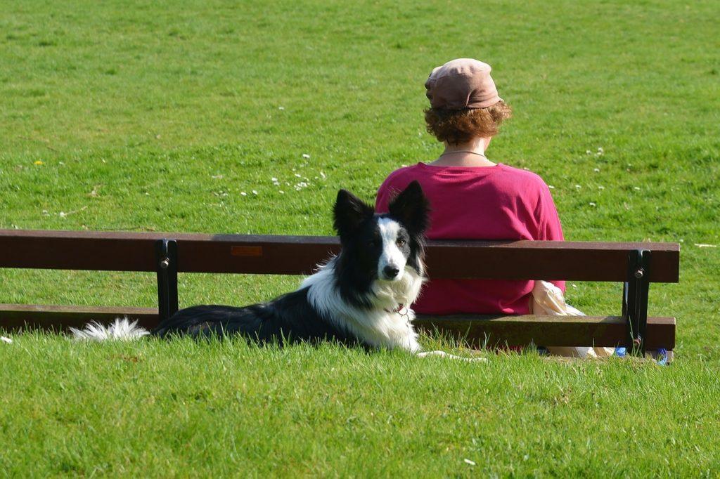 Therapy Dog หรือ Therapy Pet สัตว์เลี้ยงที่บำบัดอาการเจ็บป่วย