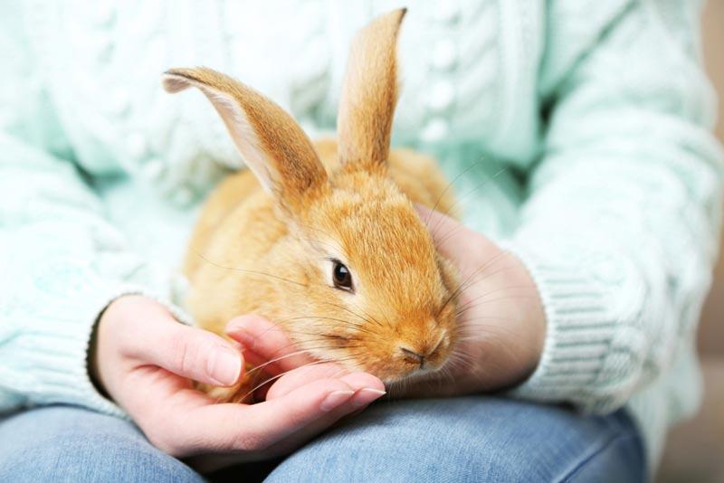 กระต่ายชอบให้คนเลี้ยงเอาใจใส่