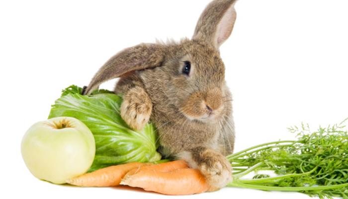 กระต่ายไม่ได้กินแครอทเป็นอาหารหลัก