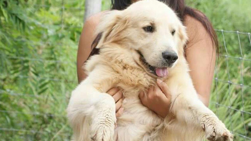 การดูแล สุนัขพันธุ์โกลเด้นรีทรีฟเวอร์