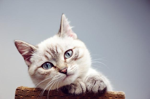 นิสัยของแมวที่ชอบหันบั้นท้ายมาใกล้ๆ