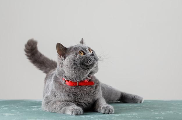 นิสัยแมวทีชอบตะปบ แกล้งงับขา