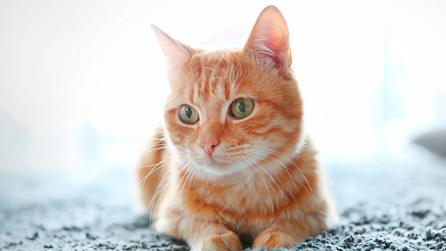 นิสัยของแมว ที่มนุษย์เดาใจยาก