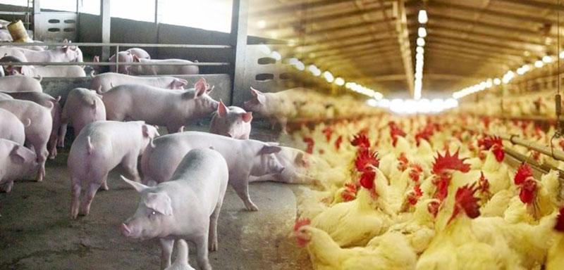 สัตว์เลี้ยงนำมาทำอาหาร สัตว์เลี้ยงคู่ครัวในยุคเศรษฐกิจแบบนี้